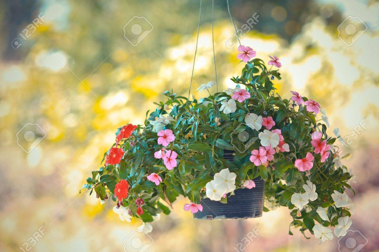 colorful flower hanging Stock Photo - 18911364
