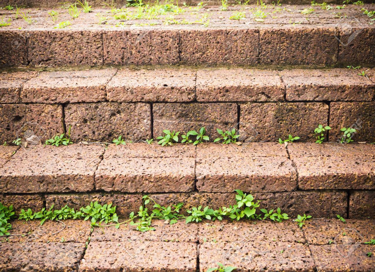 Rock Stair With Little Grass Growing In Garden Stock Photo, Picture ...