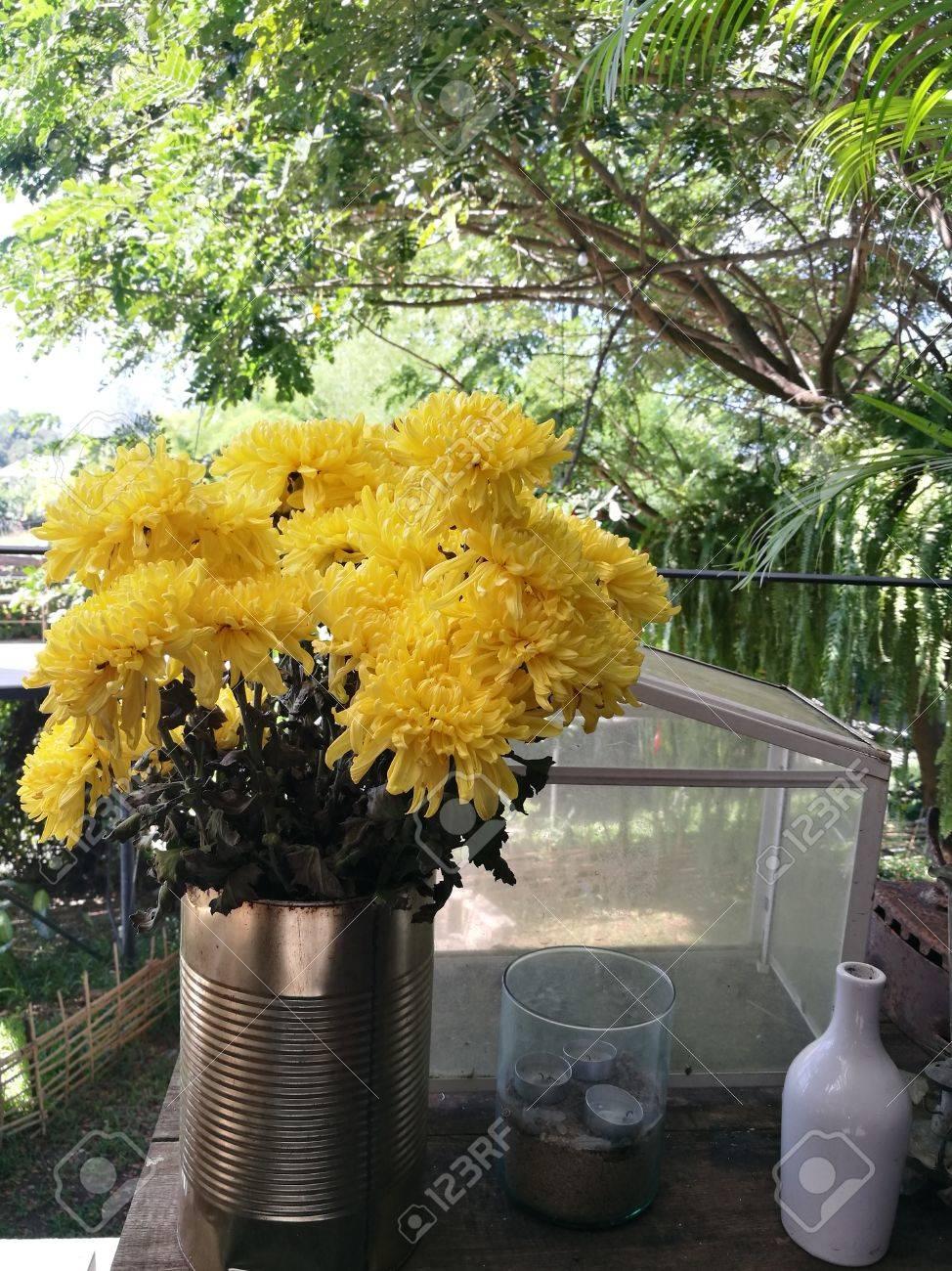 Gelbe Blumen Der Chrysantheme Im Garten An Sonnigen Tag Schone