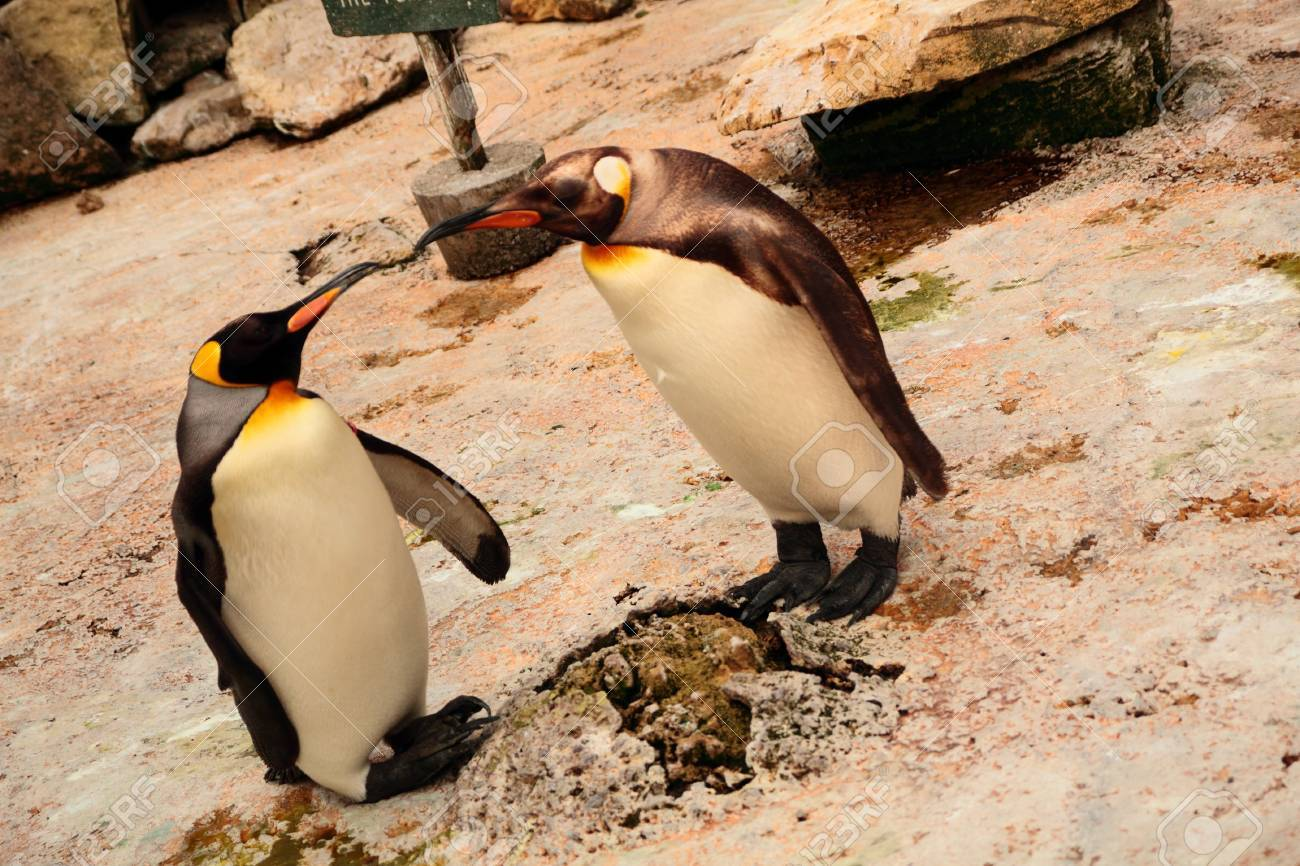 penguin lover stock photo picture and royalty free image image