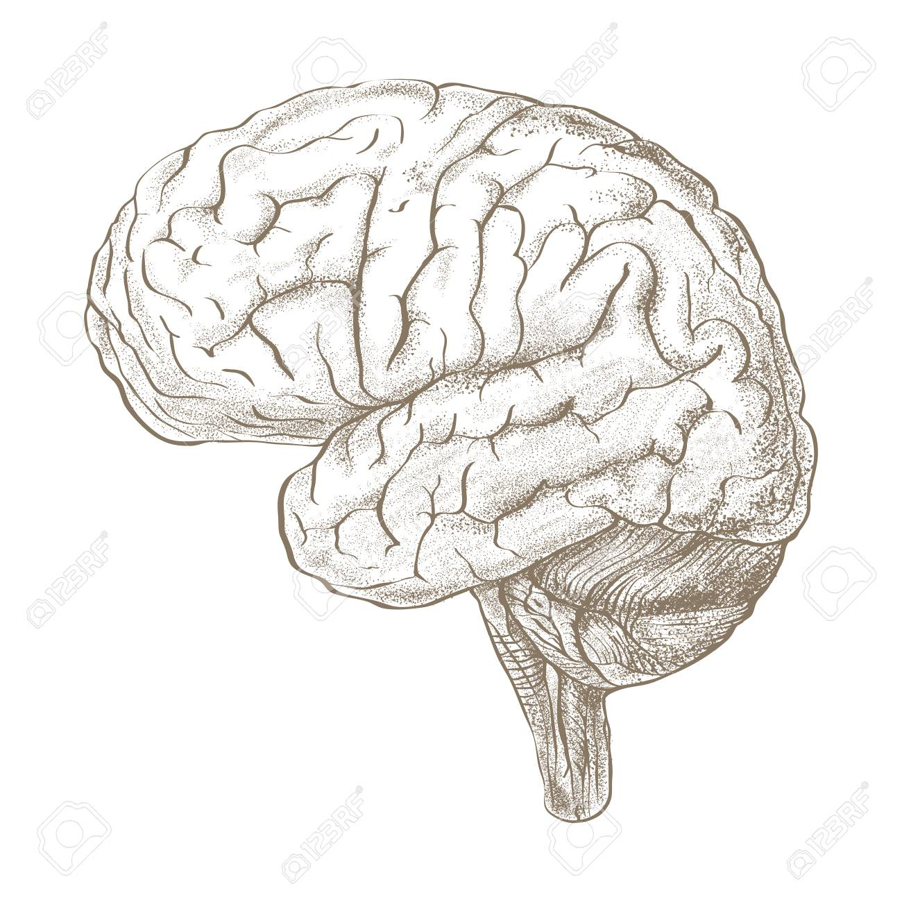 Brain as a pencil sketch style image stock photo 71241278