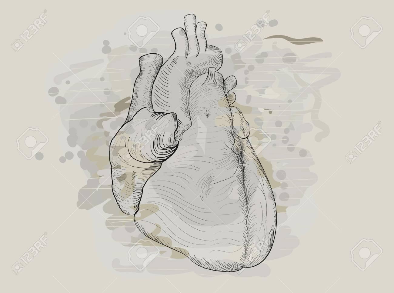 Computer graphic drawn human heart imitating pencil sketch