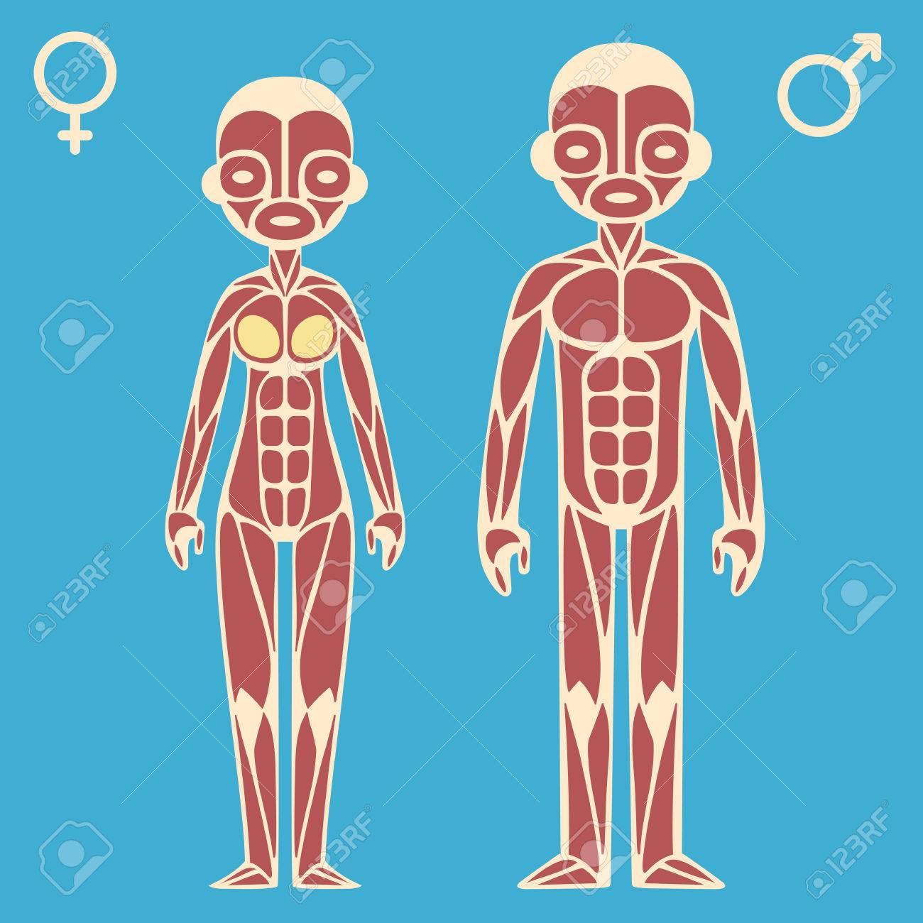 Masculina De Dibujos Animados Estilizada Y Gráficos Musculares ...