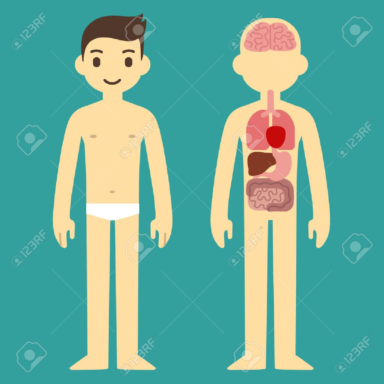 Stylized Human Body Anatomy Chart Skeletal Muscular Circulatory