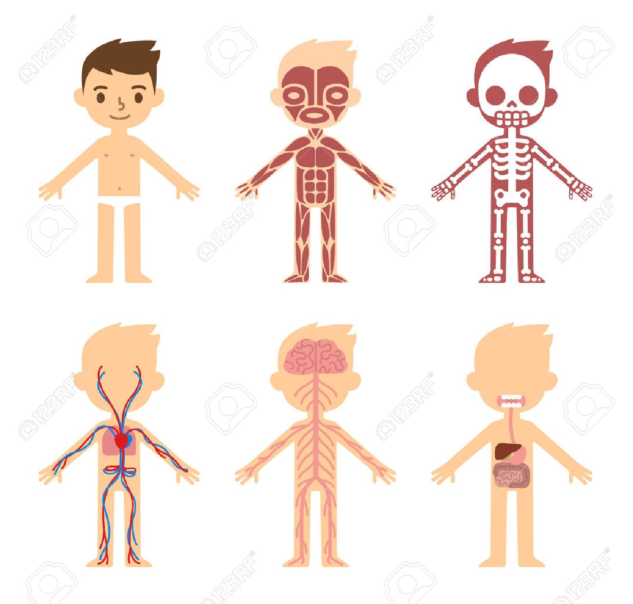 My Body Educational Anatomy Body Organ Chart For Kids Cute