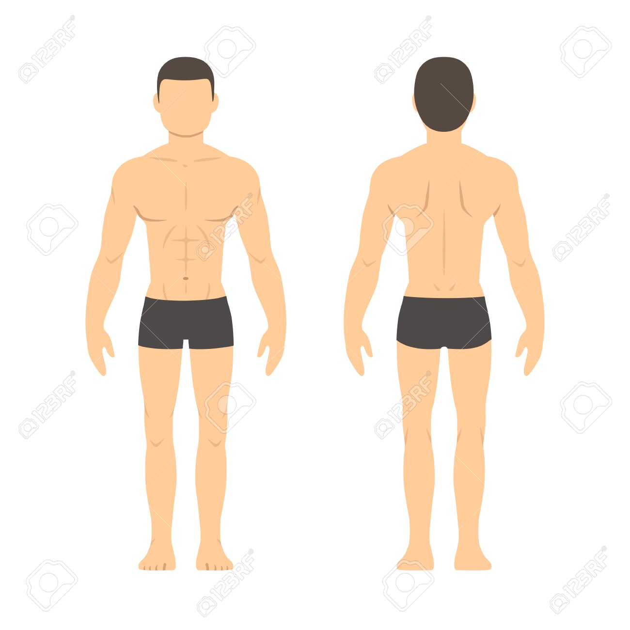 Athletic male body chart. Muscular man body from front and back. Isolated health and fitness illustration. - 53372784