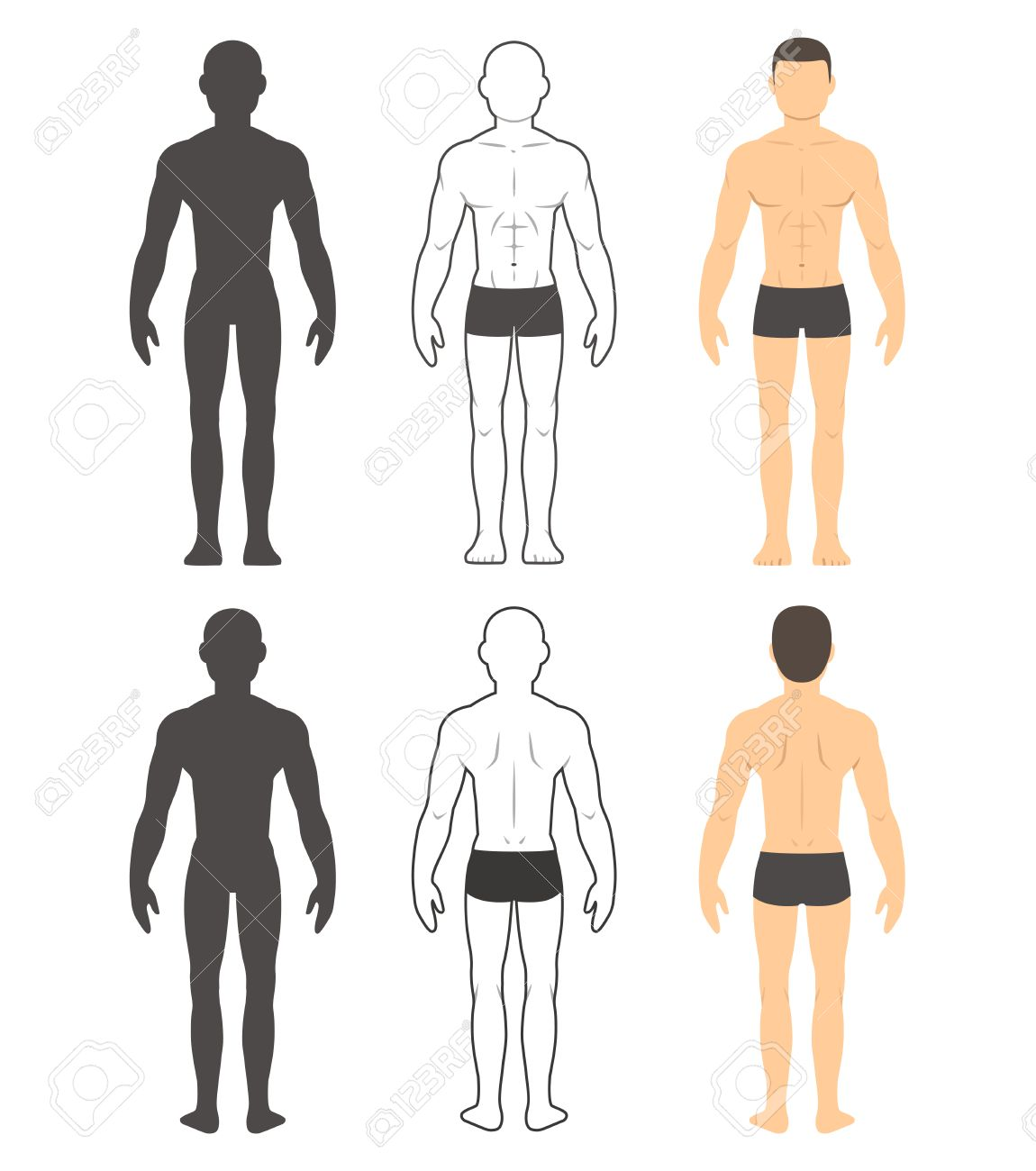 Male Body Chart Muscular Man Front And Back In Silhouette Line