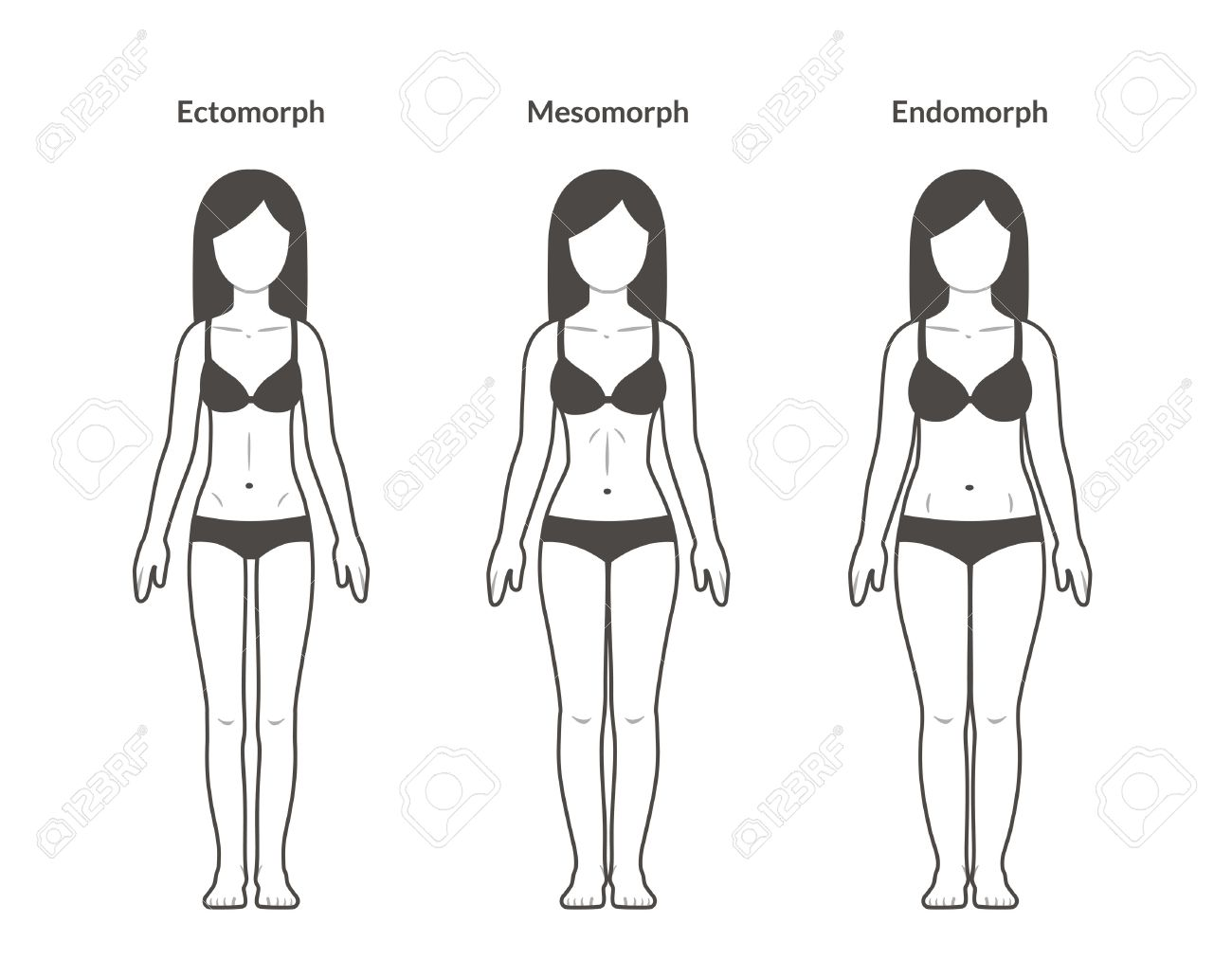 tipo de cuerpo endomorfo mesomorfo