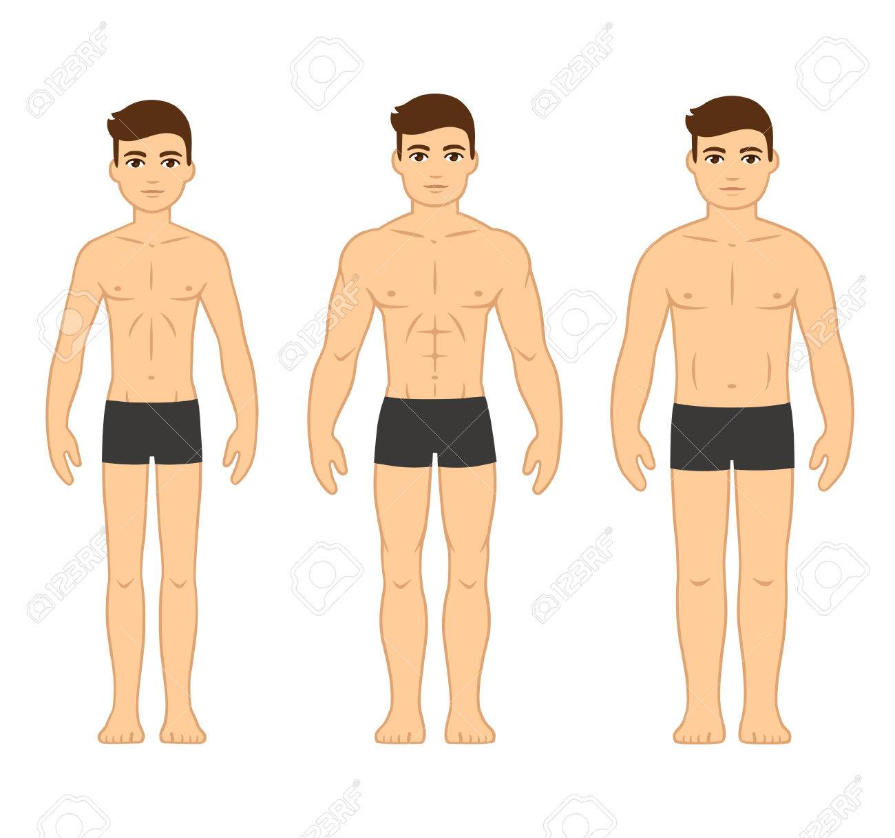 Male body types diagram ectomorph skinny mesomorph muscular male body types diagram ectomorph skinny mesomorph muscular and endomorph ccuart Images