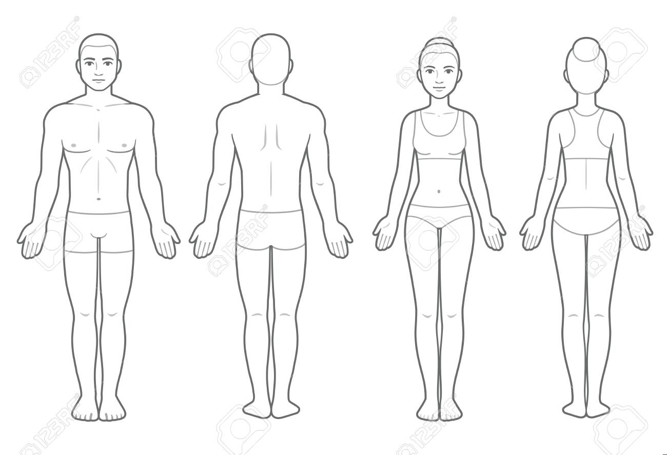 Male and female body chart, front and back view. Blank human body template for medical infographic. Isolated vector clip art illustration. - 127313129