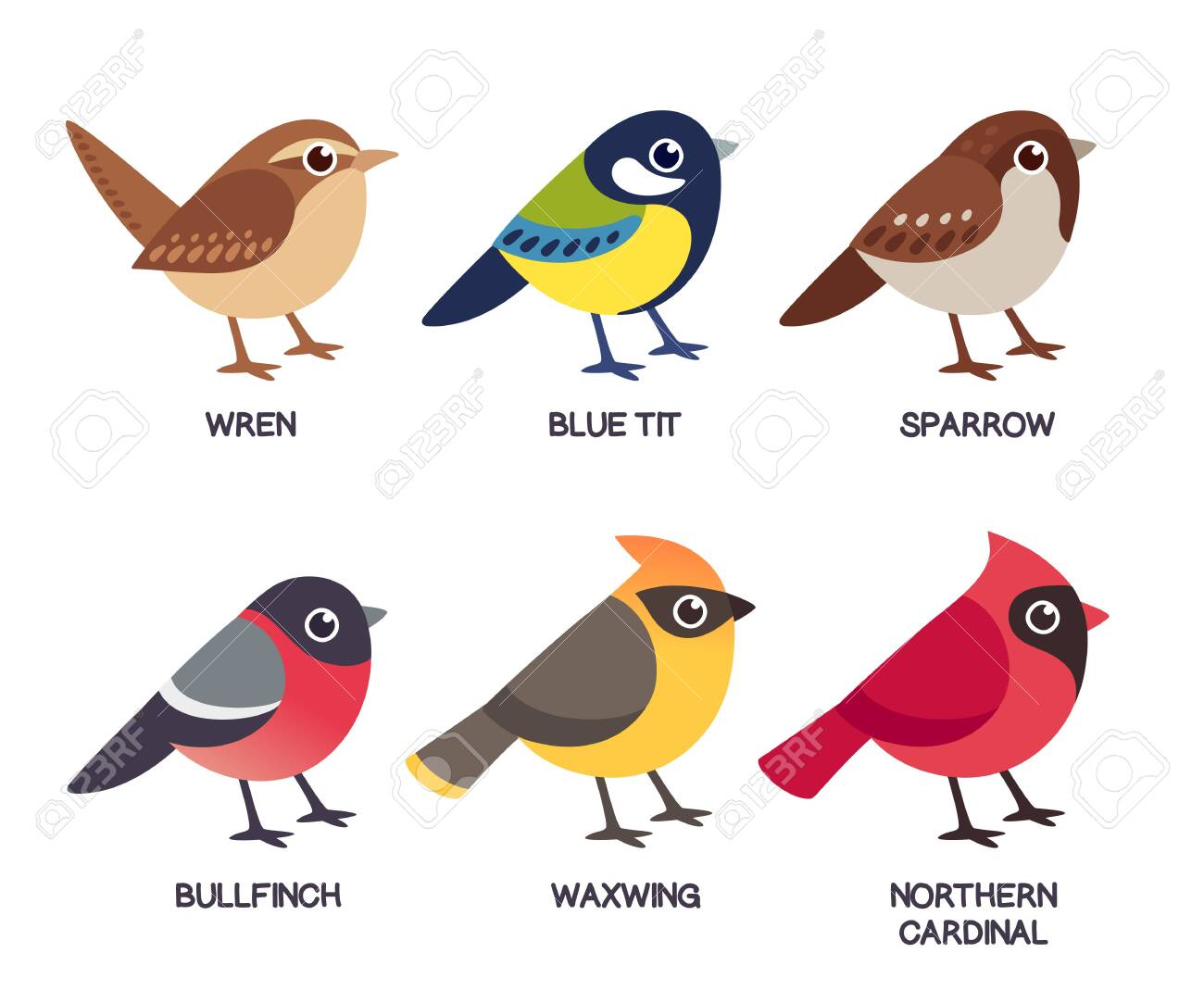 Set of cute cartoon small birds: Cedar Waxwing, Northern Cardinal, common Sparrow, Wren, Blue Tit and Bullfinch. Simple drawing style, isolated clip art vector illustration. - 128176319