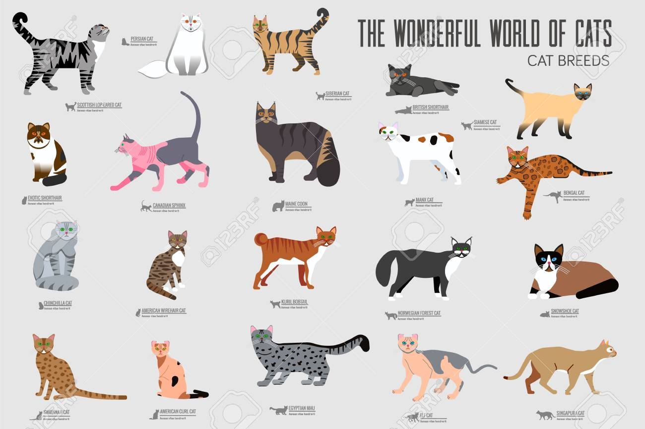 Vector Breed Cats Icons Set Cute Animal Illustrations Pet Design Stock Photo Picture And Royalty Free Image Image 112591909