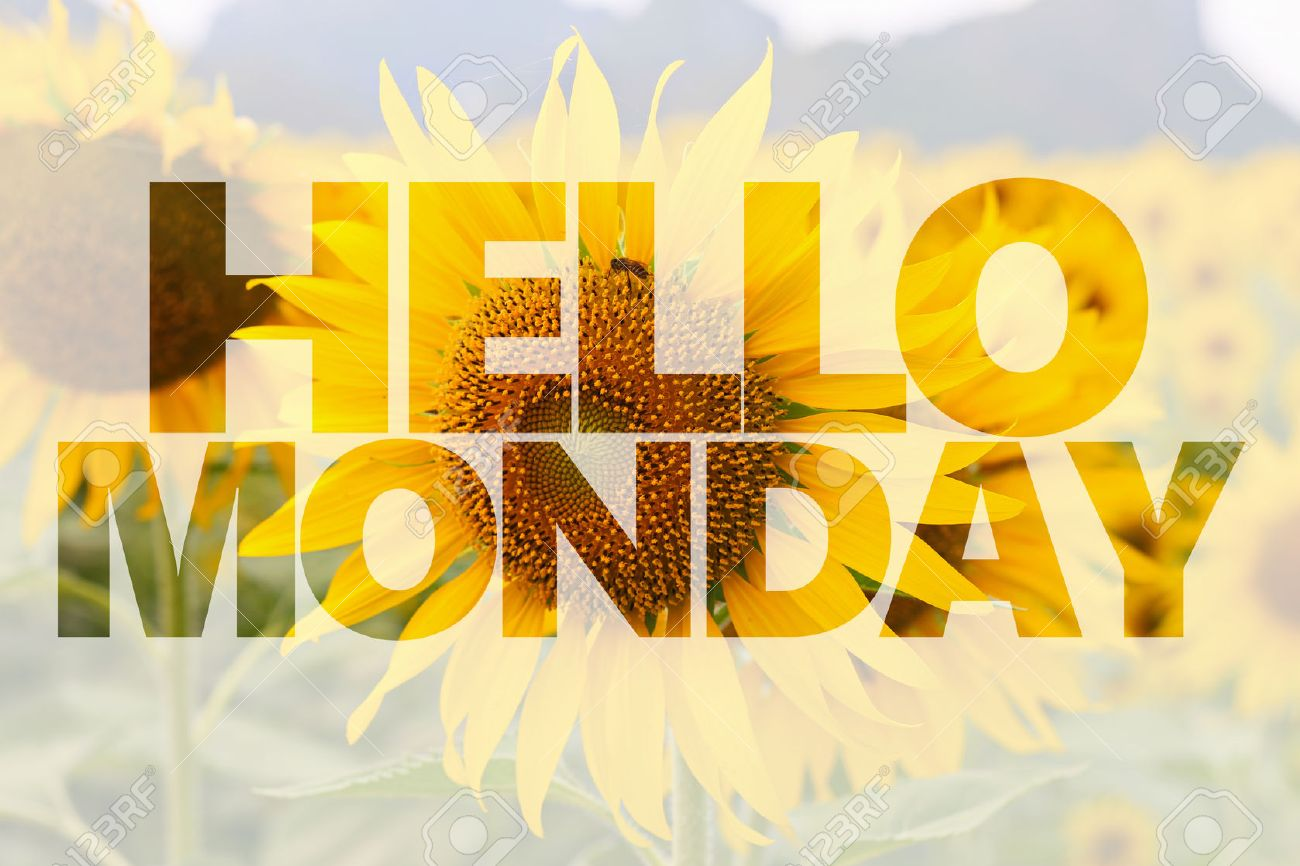 Hello Monday Word On Sunflower Background Stock Photo, Picture And ...