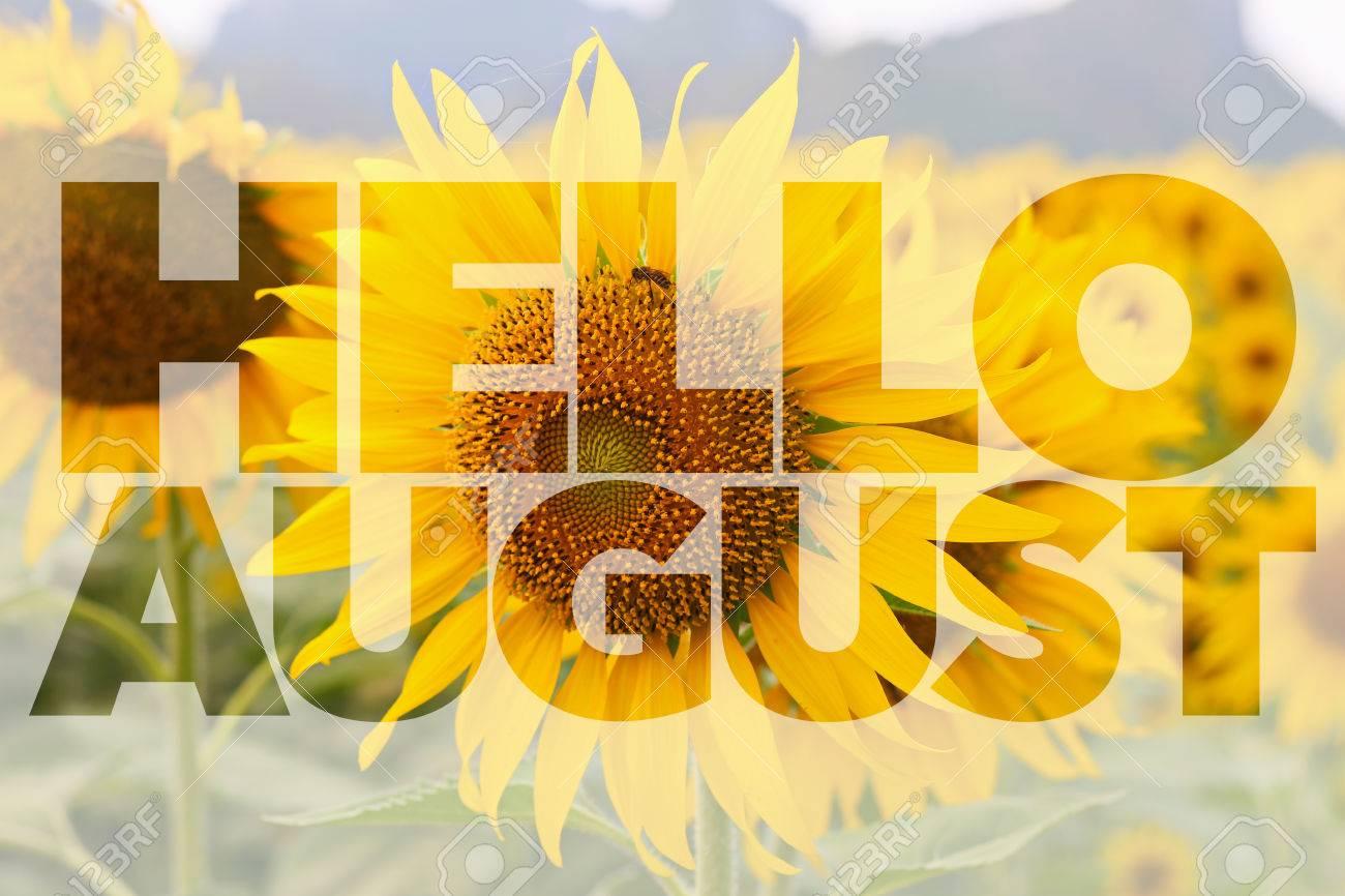 Hello AUGUST word on sunflower background - 60483351