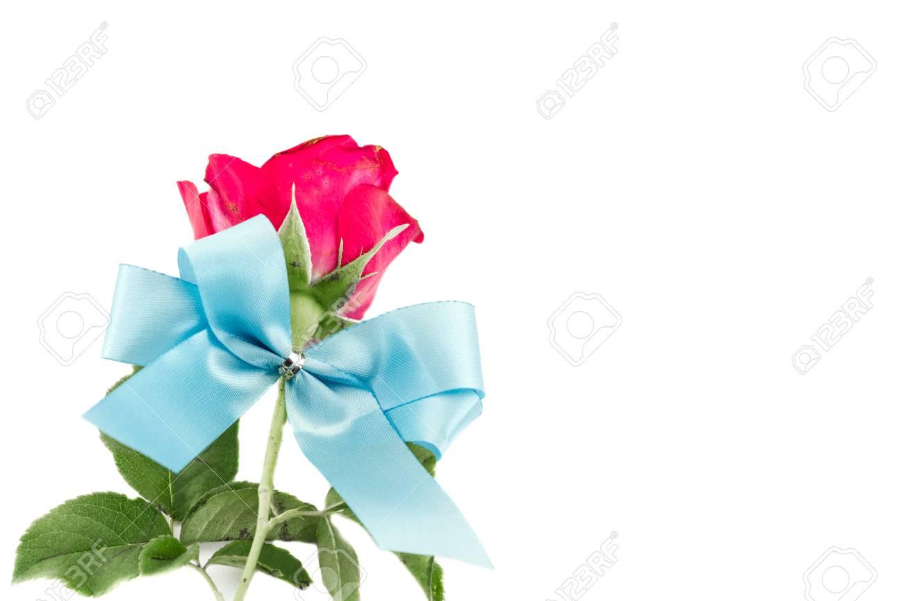 Rosas Rojas Y Cintas Azules Aislados Sobre Fondo Blanco Fotos