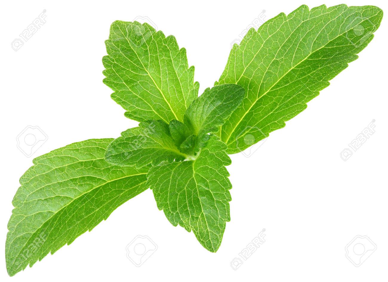 Stevia rebaudiana, sweet leaf sugar substitute isolated on white background Standard-Bild - 13957649