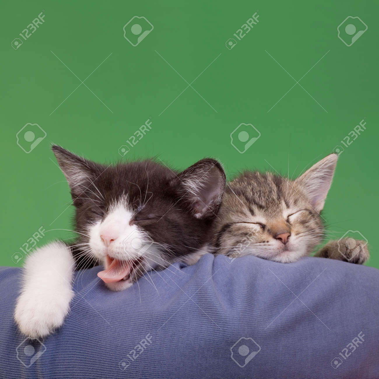 Two Dreamy Cats Domestic Cats Isolated on Green Background Standard-Bild - 14062554