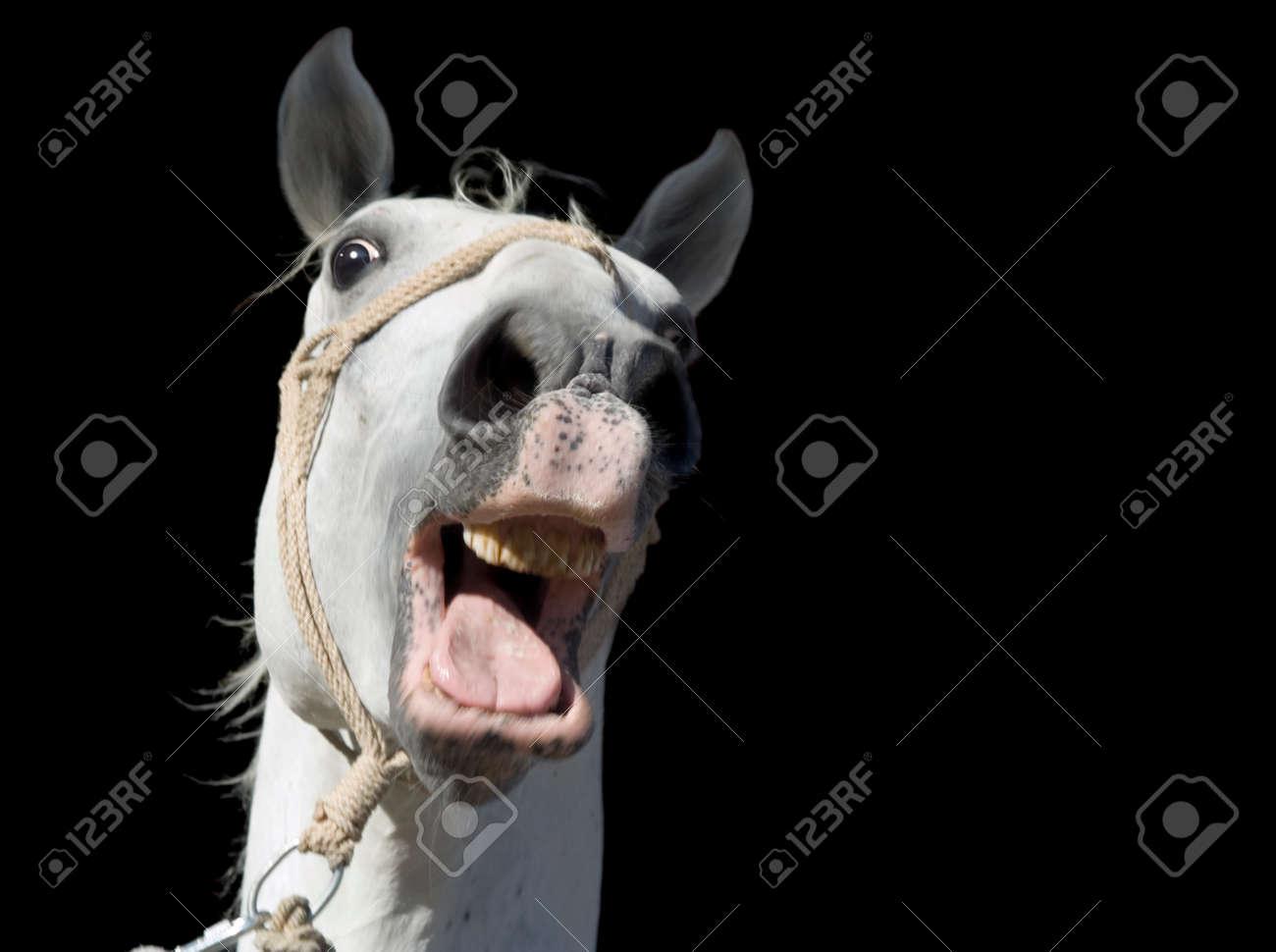 Frightened White Horse Isolated on Black Background Standard-Bild - 22980467