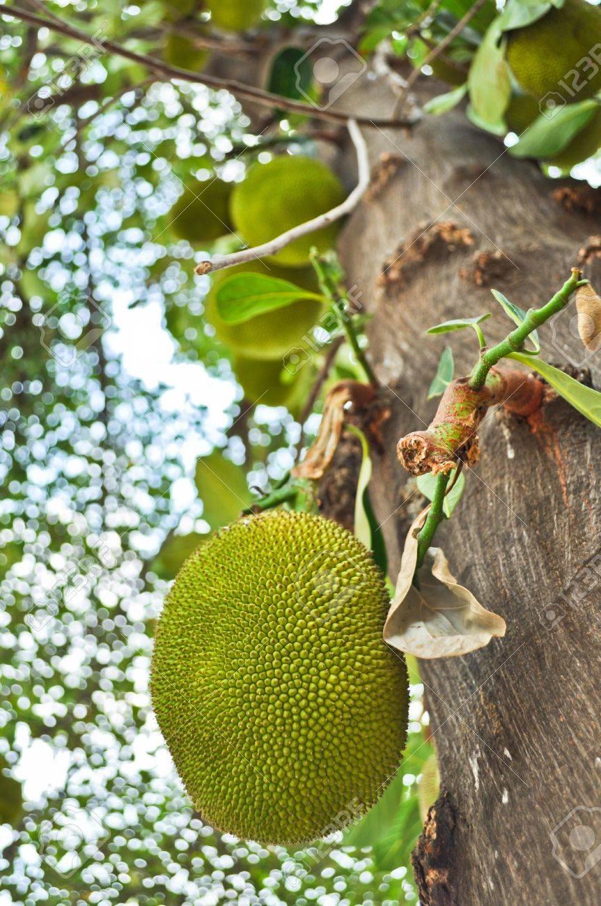 un arbre- ajonc - 2 novembre bravo Martine  9591613-jacquier-sur-l-arbre