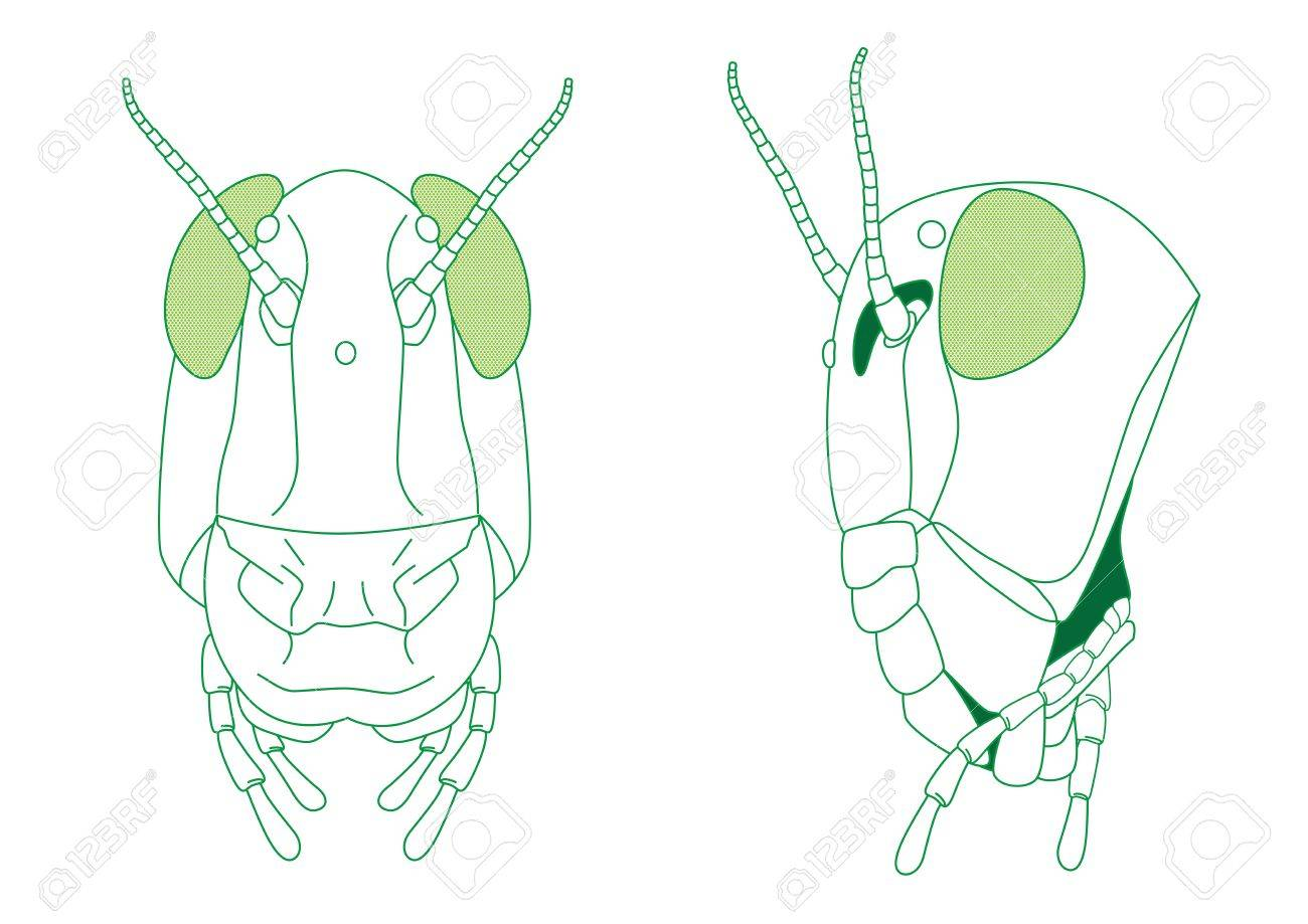 Grasshoper Diagram Head Block And Schematic Diagrams