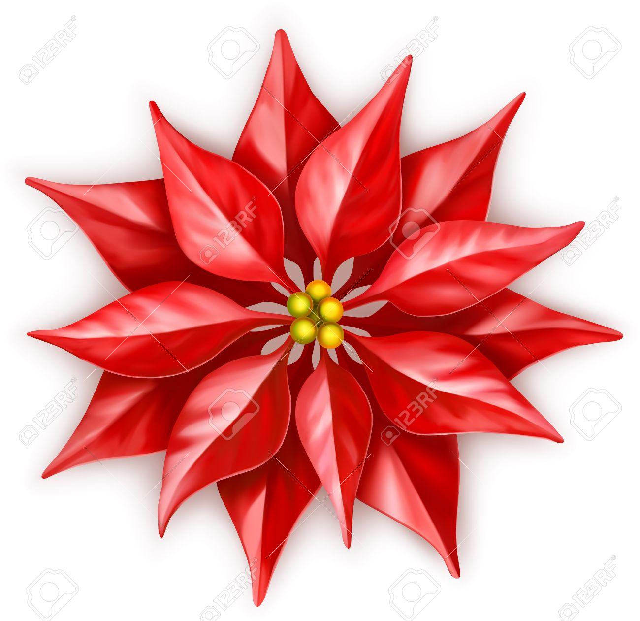 vector poinsettia christmas star flower royalty free cliparts