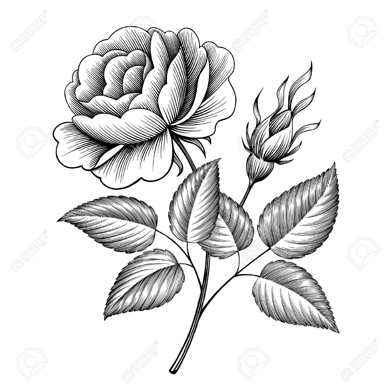 Vintage Rose Flower Engraving Calligraphic Victorian Style Tattoo