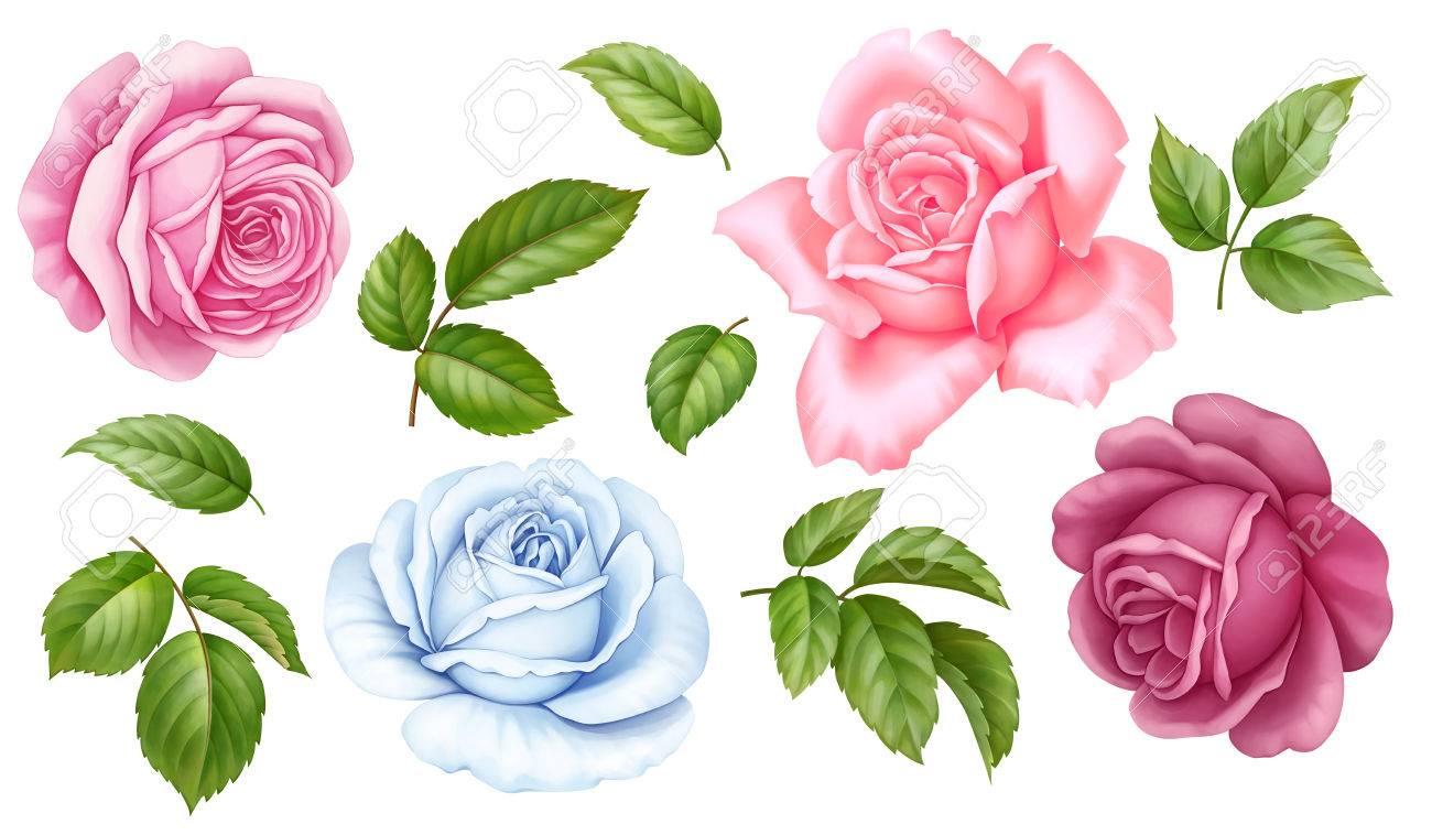 Floral set of pink red blue white vintage rose flowers green floral set of pink red blue white vintage rose flowers green leaves isolated on mightylinksfo