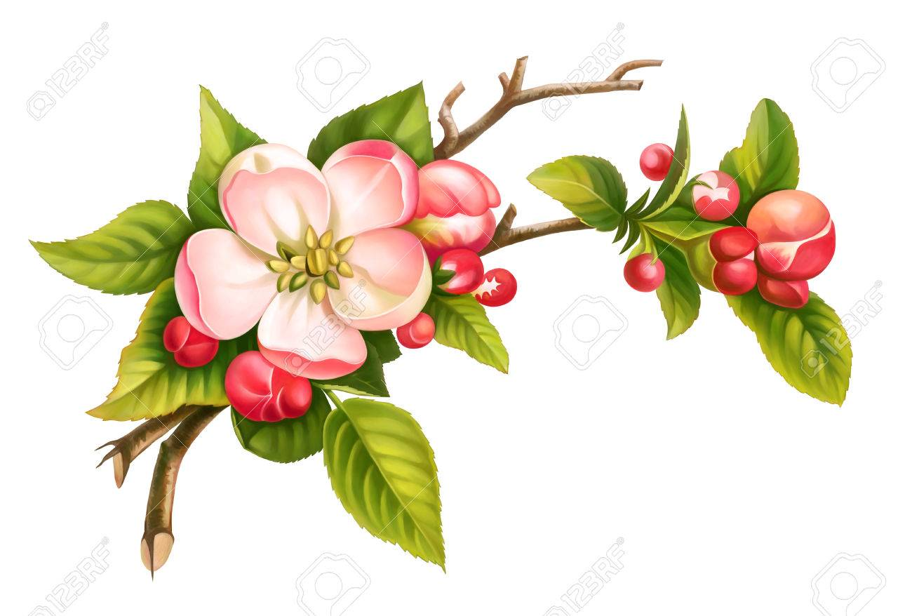 Apple blossom branch spring floral set of pink white vintage flowers green leaves isolated on white background. Digital watercolor illustration. - 73673822