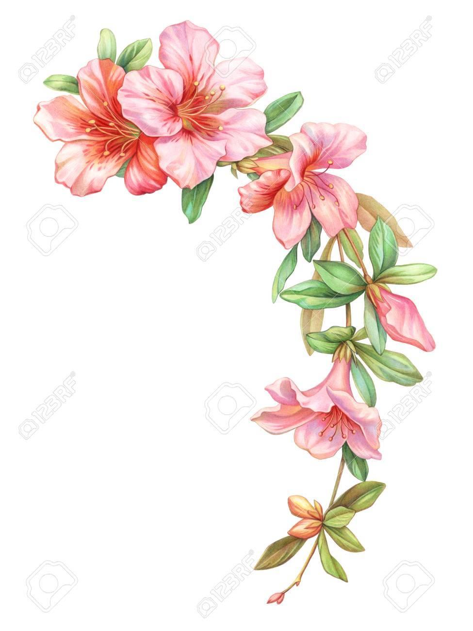 Pink White Rose Vintage Azalea Flowers Garland Wreath Isolated ...
