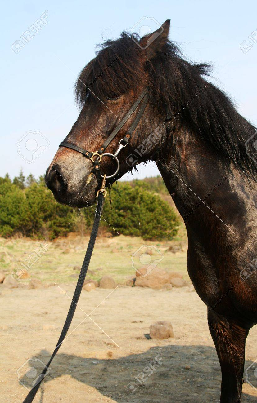 black horse standing , cropped shot of front half Stock Photo - 573770
