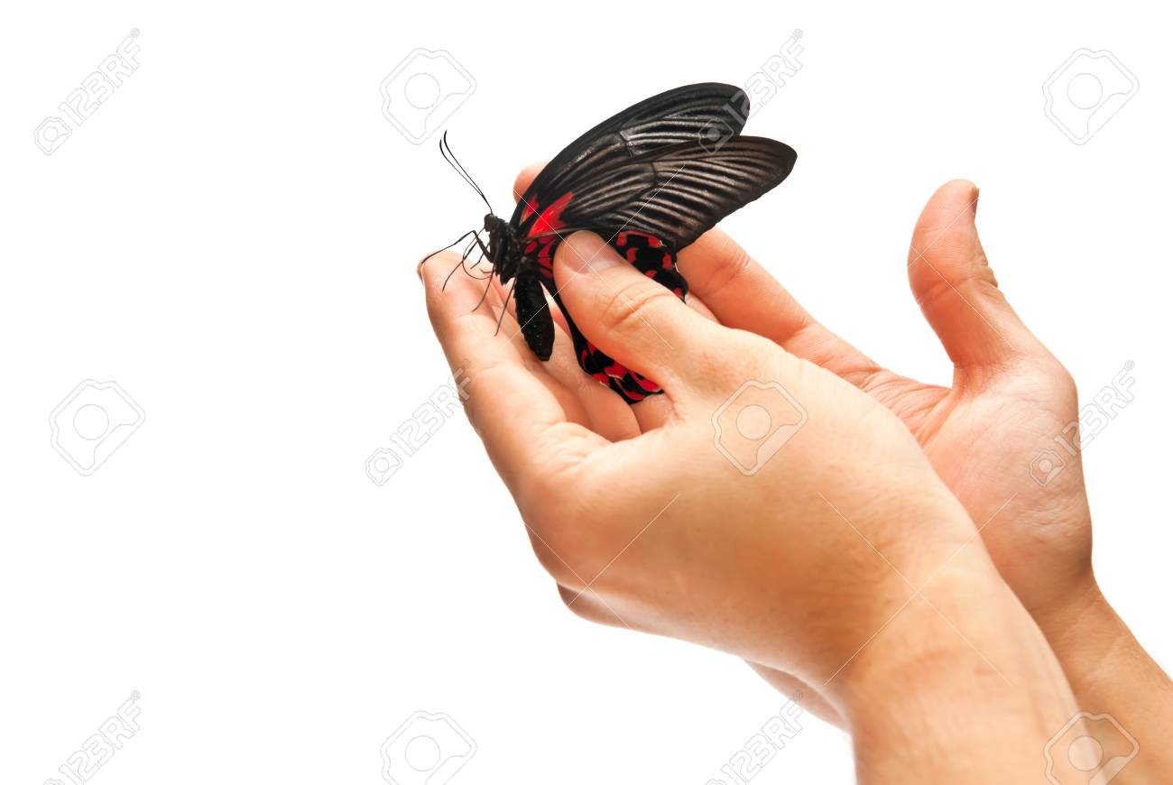 Beautiful black and red butterfly in hands Stock Photo - 8152521