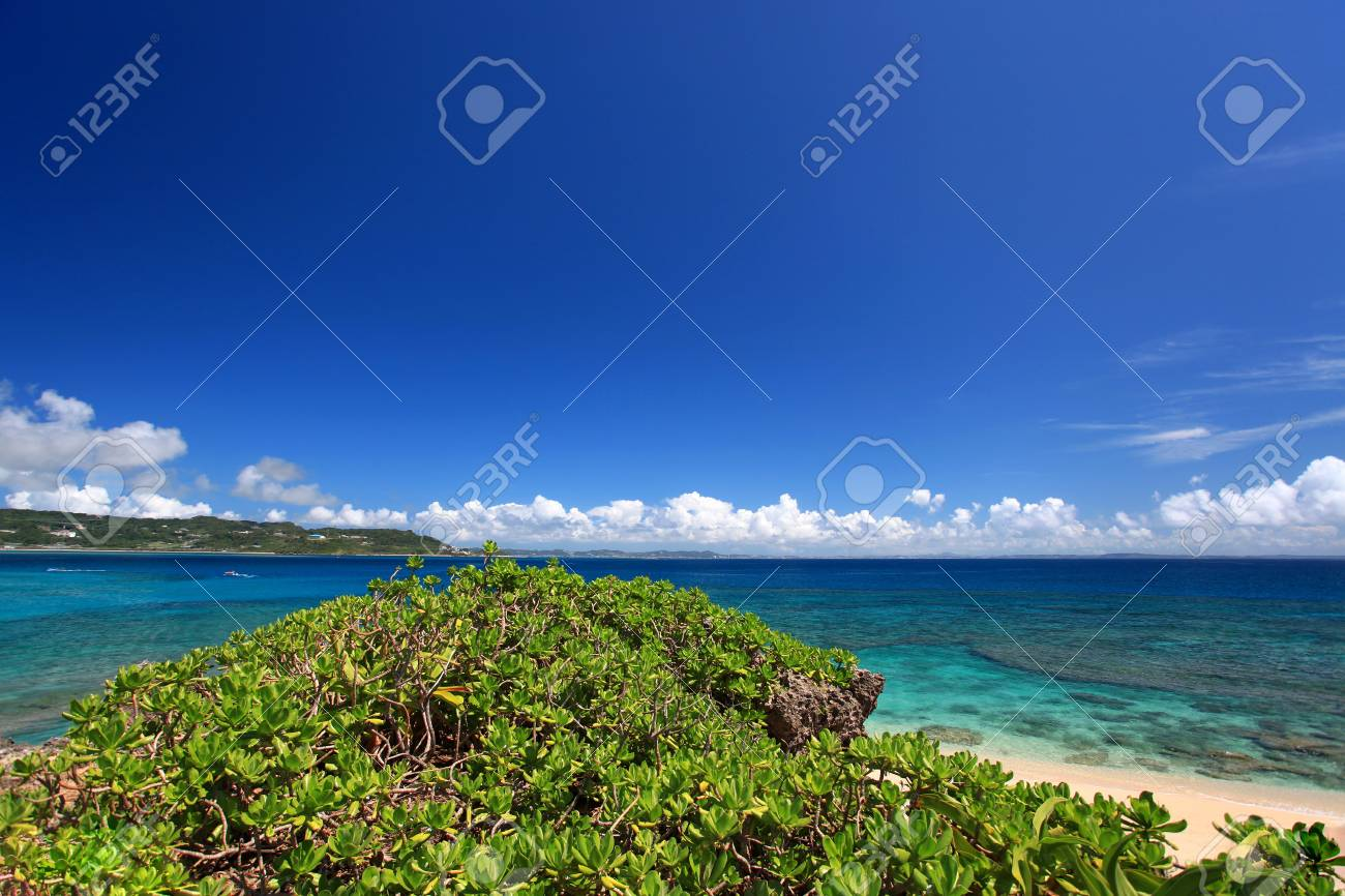 Summer sky and the green of the Okinawa subtropical plants Stock Photo - 17350479