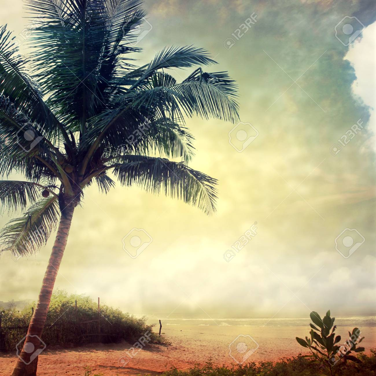 grunge palm background Stock Photo - 14788458