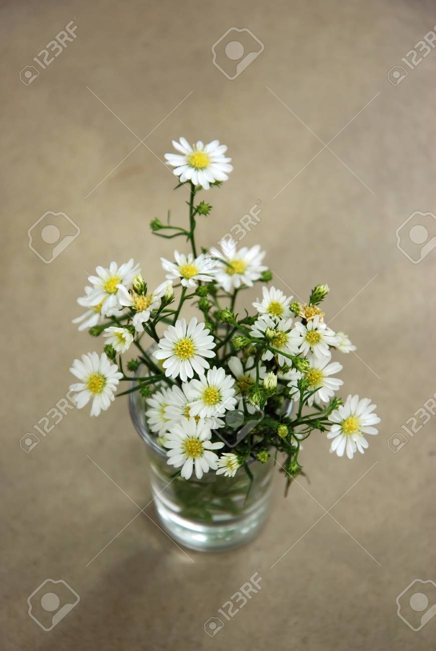 White Little Daisy Flower A Select Focus Close Up Photo Image