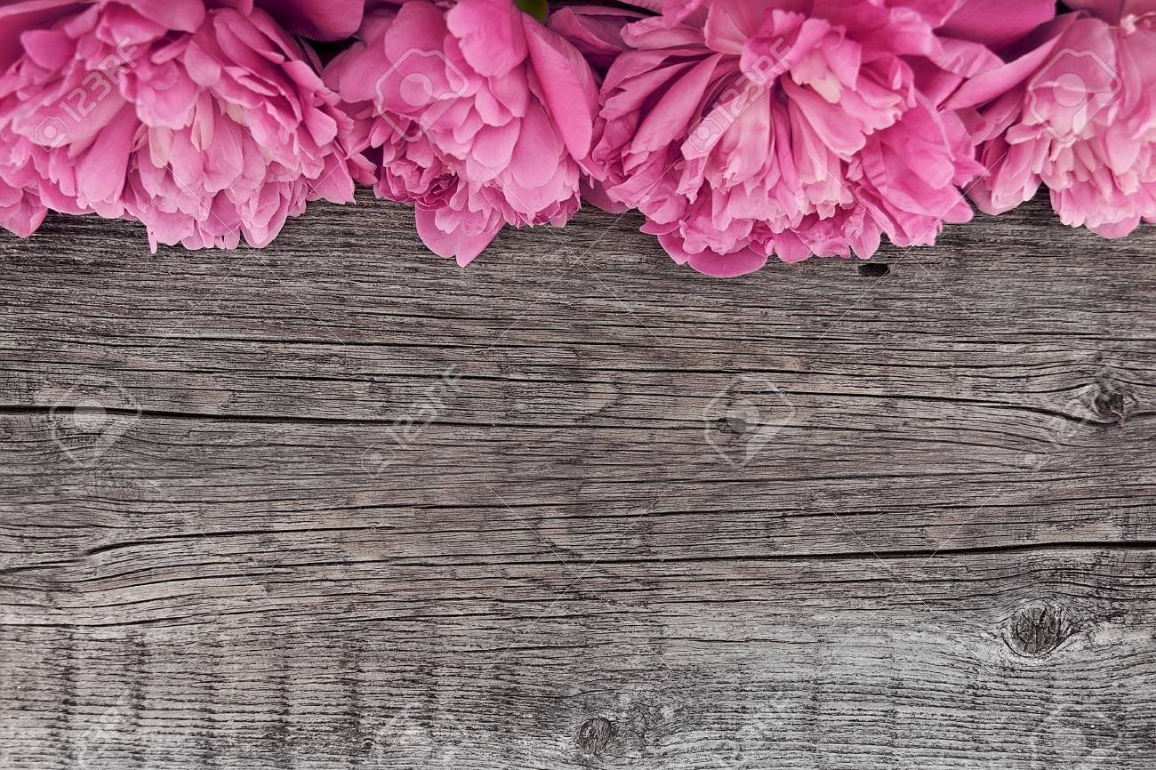 Pink Peony Flower On Dark Rustic Wooden Background With Copy Space For Greeting Message Top