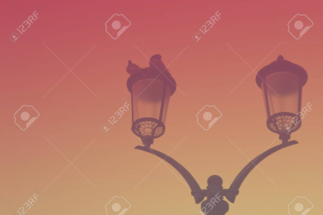 silhouette of a vintage streetlight on sunset background doves