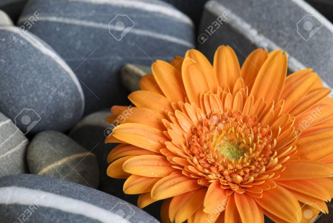 gerbera flower Stock Photo - 5752690