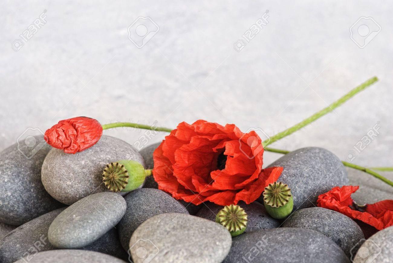 red poppy flower on pebble Stock Photo - 6534692