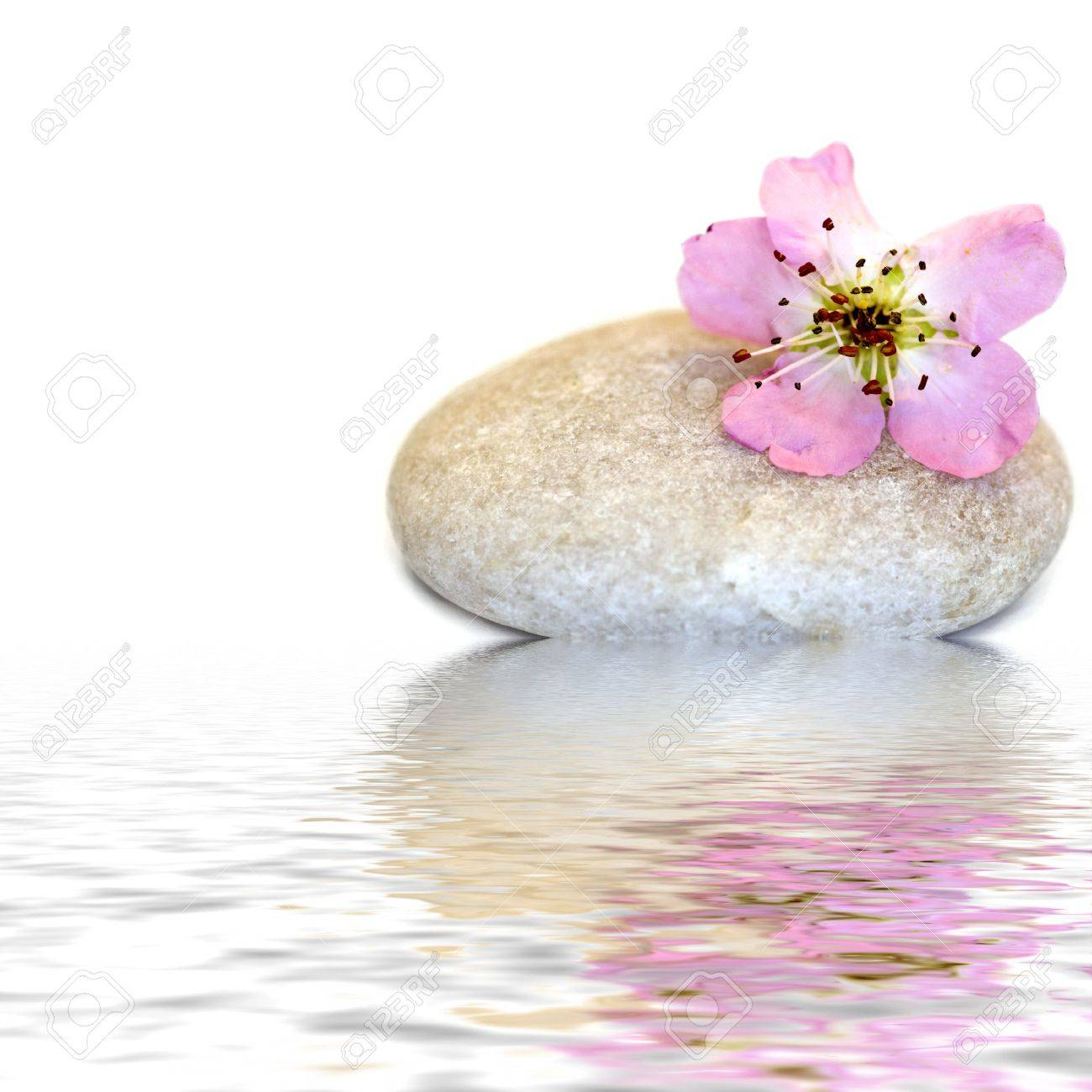 peach blossom on stone in water Stock Photo - 6550589