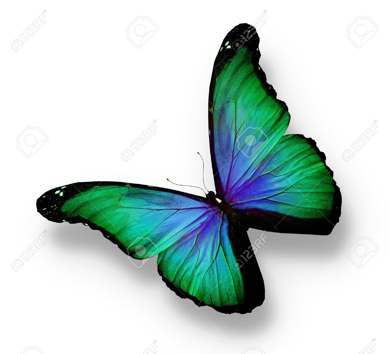 green butterfly images u0026 stock pictures royalty free green
