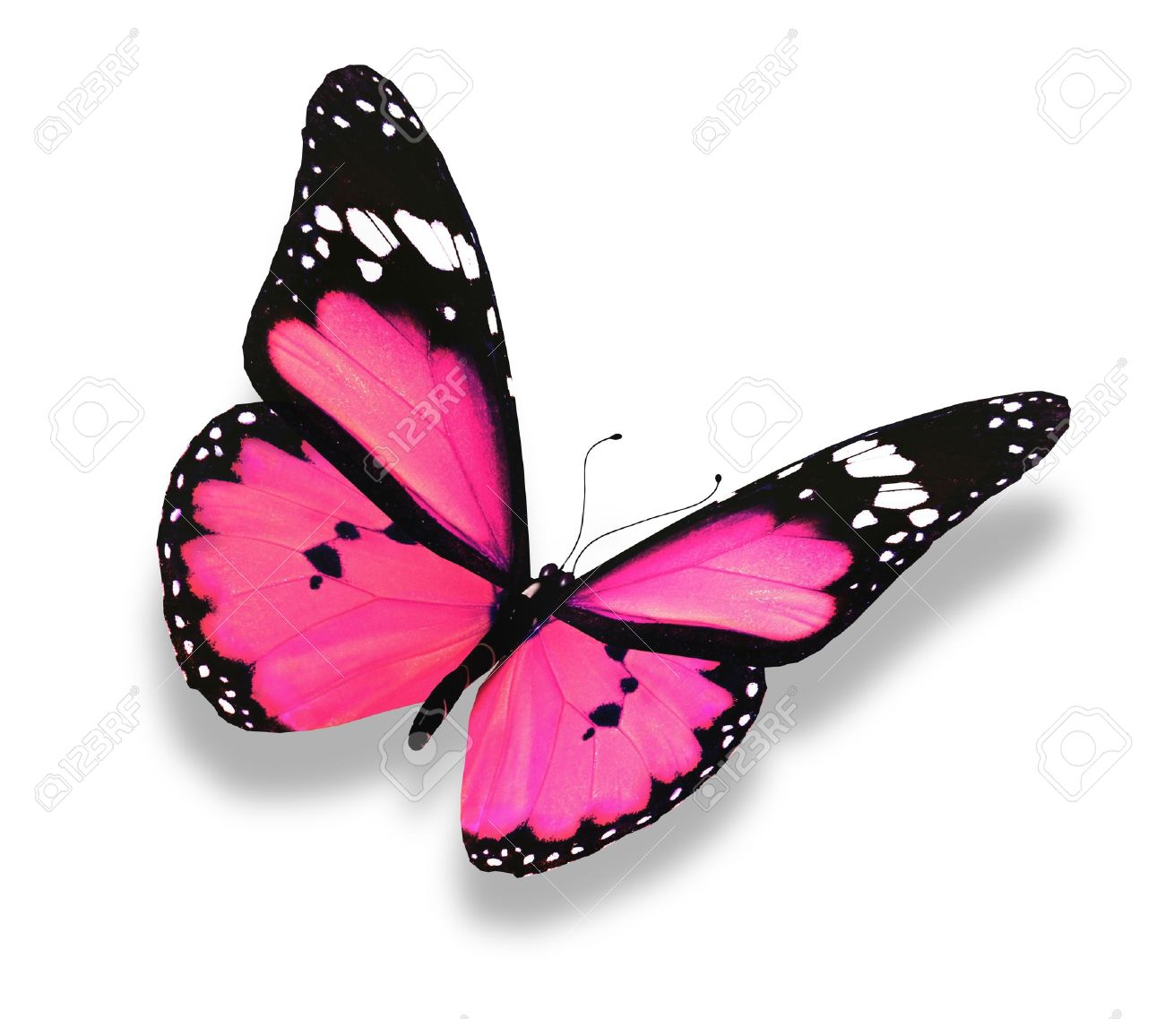 pink butterfly  Pink  Butterfly