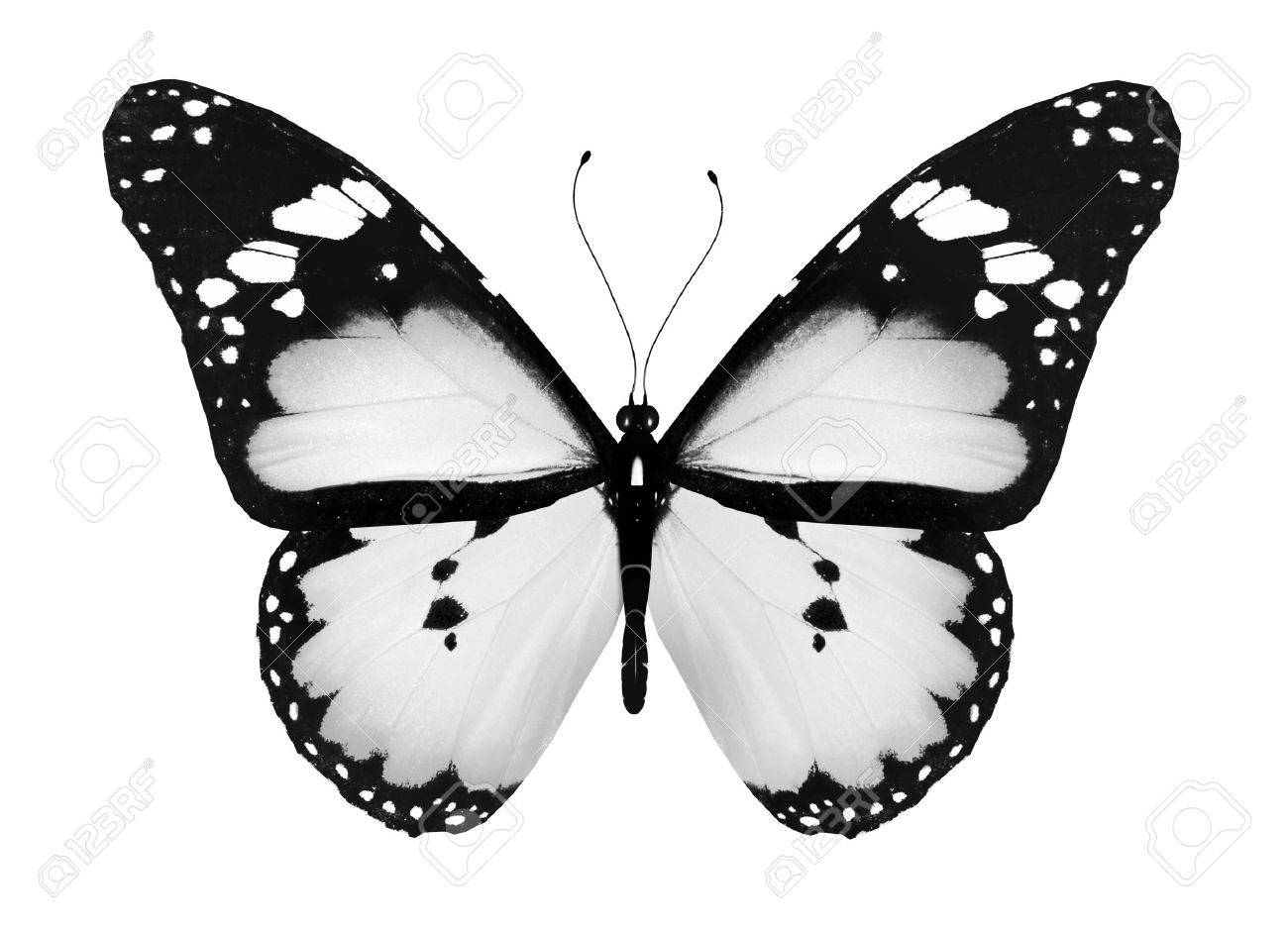Gray butterfly isolated on white