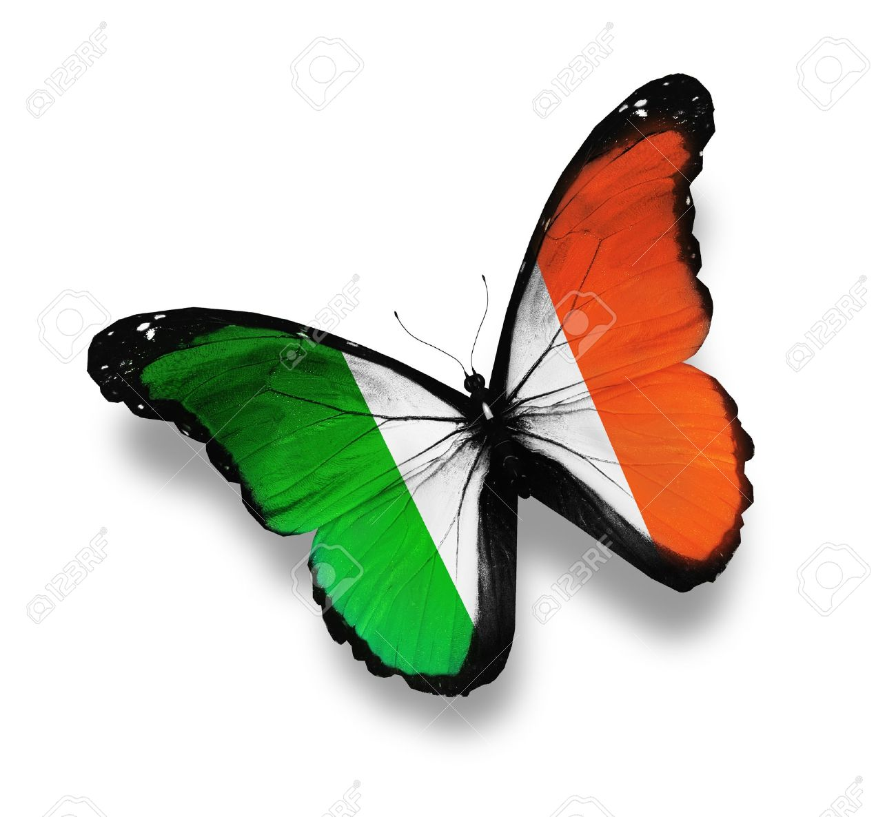 irish flag butterfly isolated on white stock photo picture and