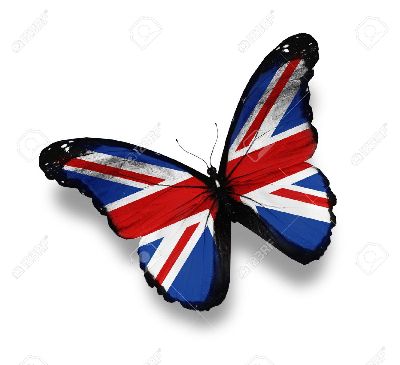 e0b1b9ae045 English flag butterfly isolated on white stock photo picture jpg 1300x1186 Flag  butterfly
