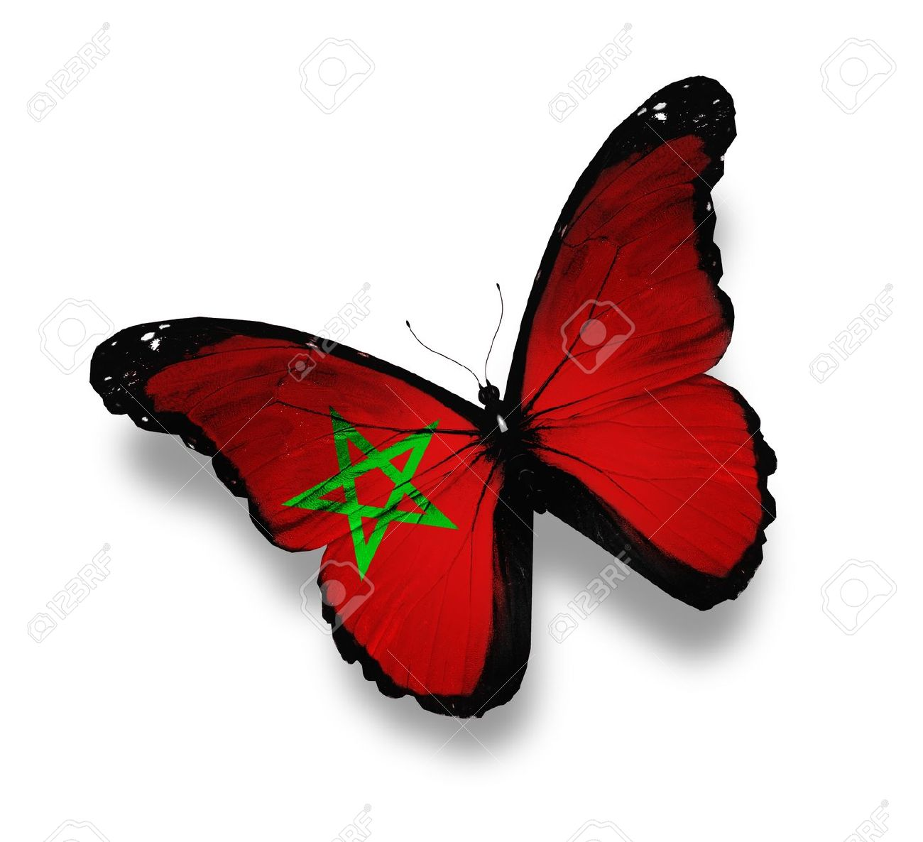 Moroccan flag butterfly, isolated on white Stock Photo - 12676279