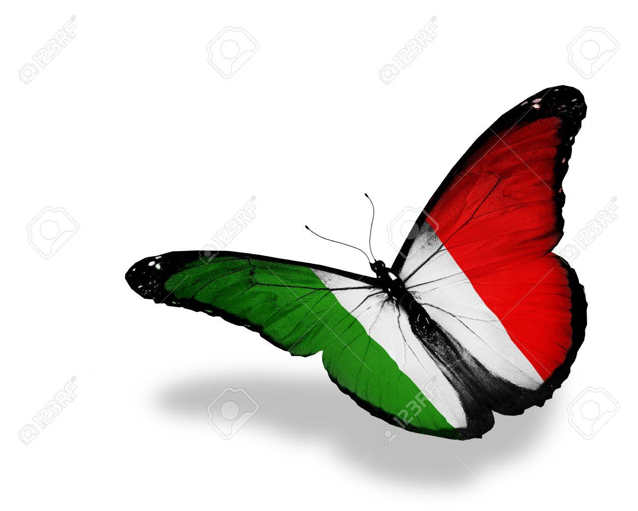 Italian flag butterfly flying, isolated on white background - 12874757