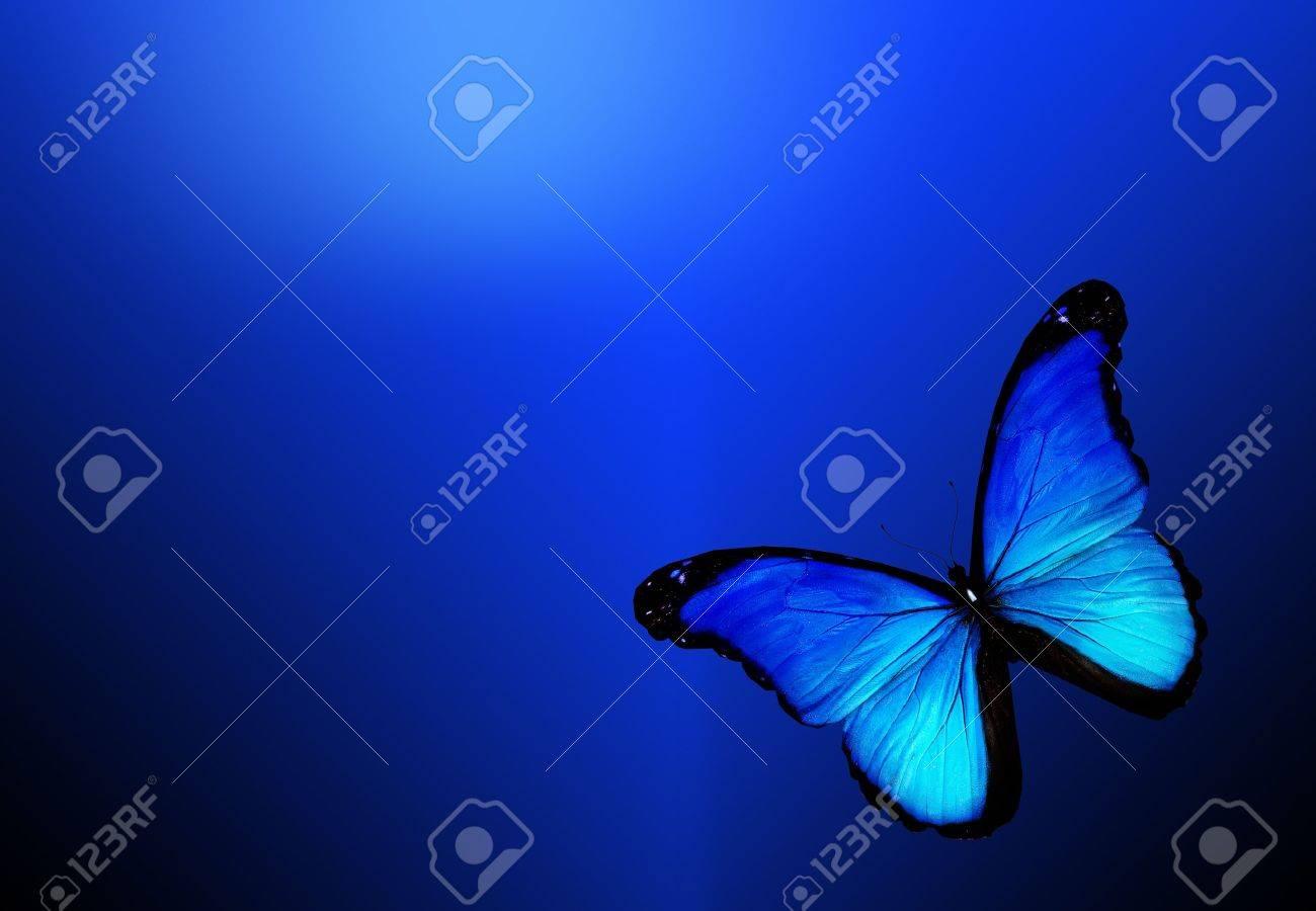 Blue butterfly on dark blue background Stock Photo - 12979212