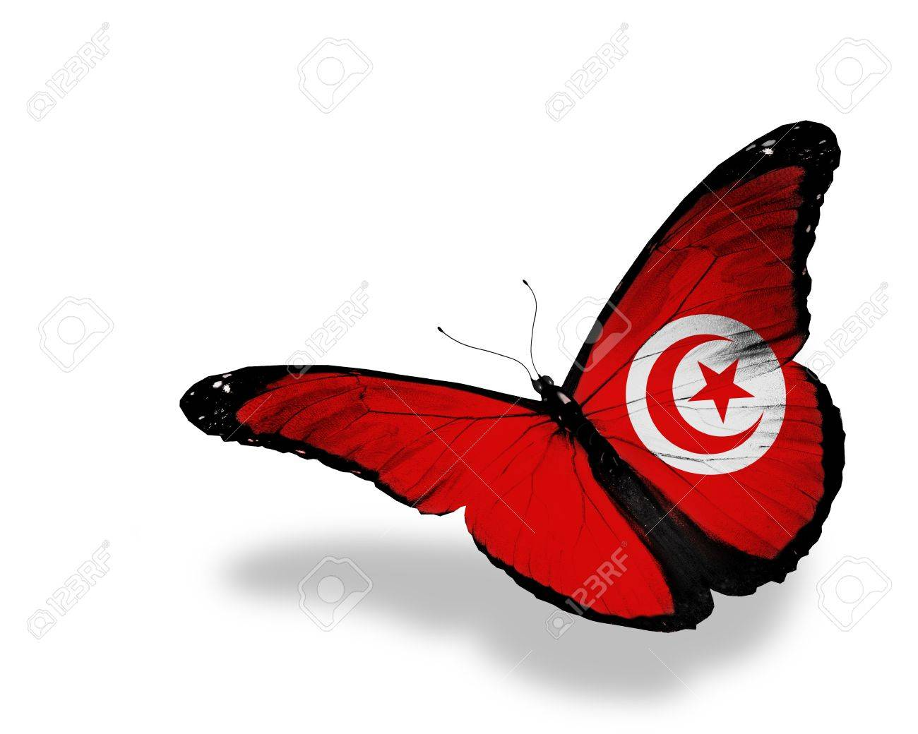 Tunisian flag butterfly flying, isolated on white background Stock Photo - 13698802