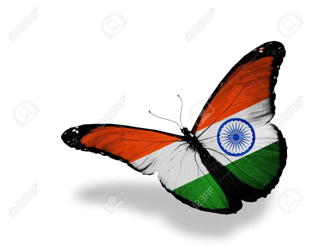 a2f4d33c7e0 Indian flag butterfly flying isolated on white background stock photo jpg  1300x1040 Flag butterfly