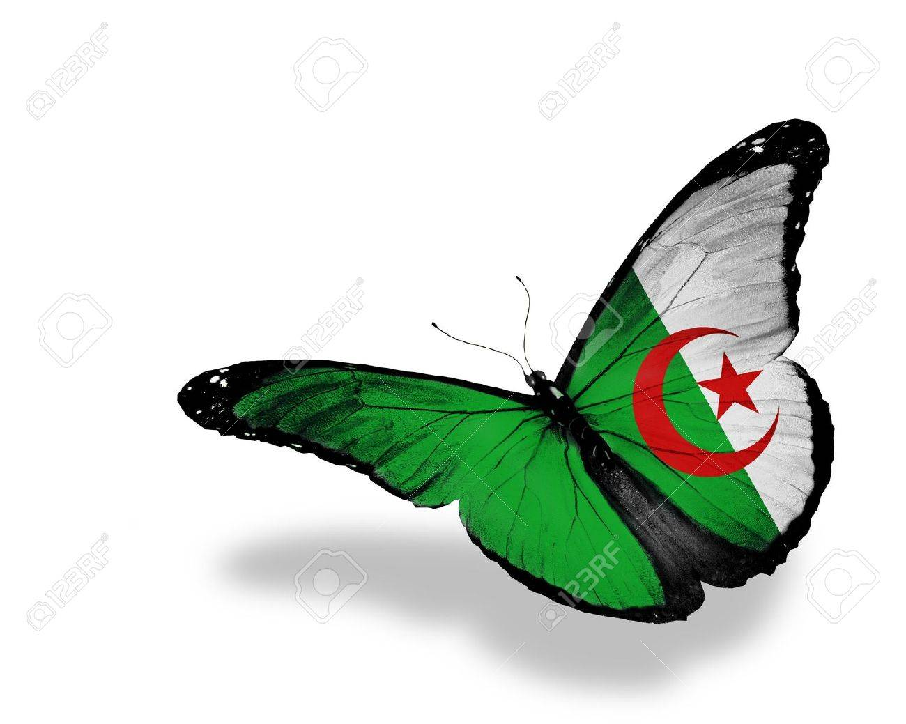 Algerian flag butterfly flying, isolated on white background Stock Photo - 13997238